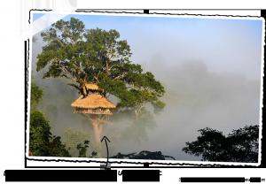 La Gibbon Experience dans la province de Bokéo au Laos