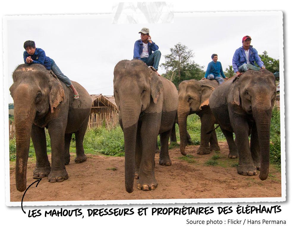 Les mahouts, gardiens des éléphants au Laos