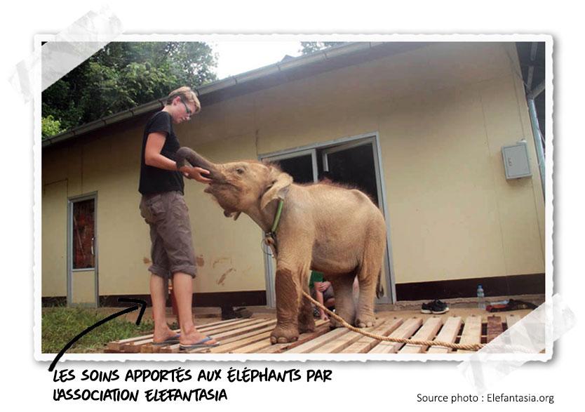 Elefantasia protège les éléphants au Laos