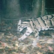 Safari nocturne au Laos