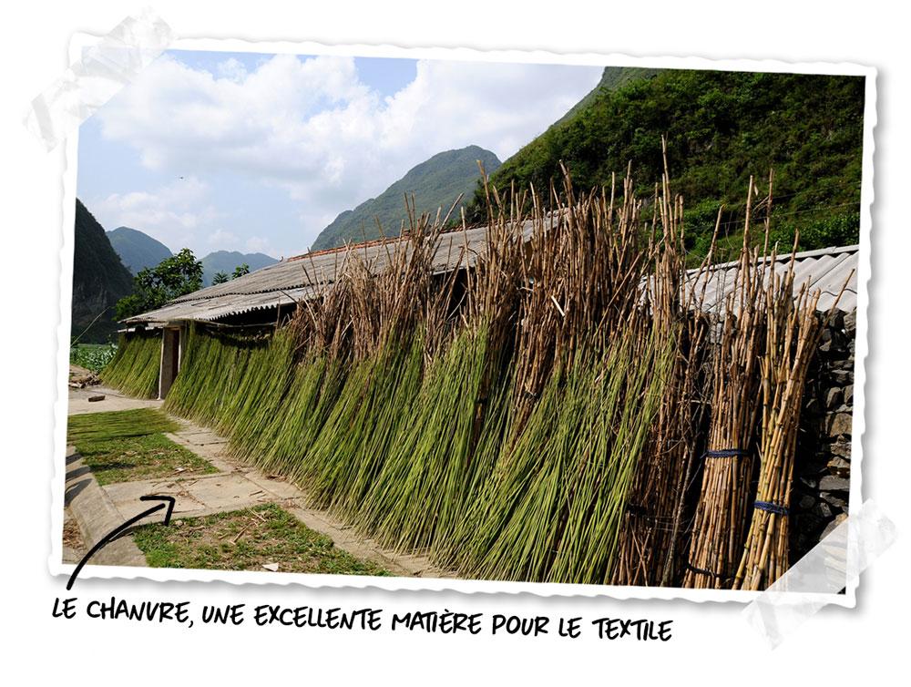 Le chanvre, matière du tissage chez les Hmong